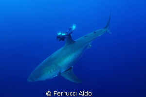 Face to face with Great White Shark in Guadalupe Island M... by Ferrucci Aldo 